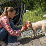 So können Sie Ihren Hund ans Auto gewöhnen